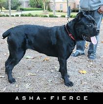 ASHA-FIERCE-2018-10-28-a4-nameplate.jpg