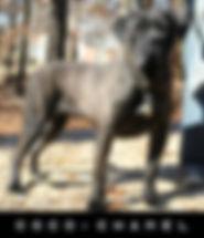 CHANEL-2019-01-21-b1-crop-nameplate.jpg