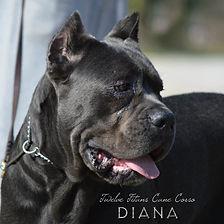 DIANA-102018-1.jpg