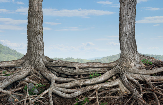 To Understand A Tree, You Must Understand The Root