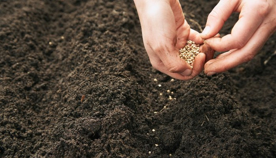 In What Kind Of Soil Are Your Seeds Planted?