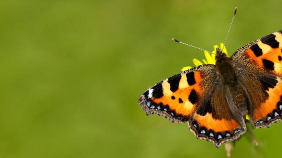 Butterfly Dreams of A Caterpillar