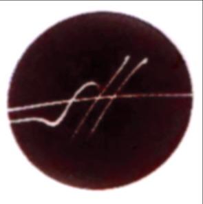 logomarca gabriel dotta