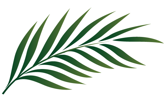 palm 01.png