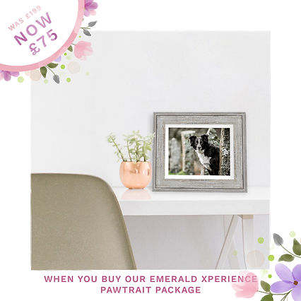Emerald Dog Mother's Day Sale Ads frames