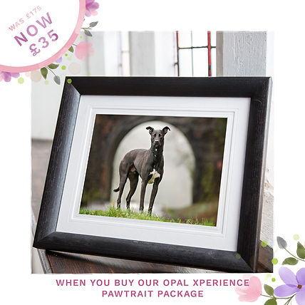 Opal Dog Mother's Day Sale Ads frames.jp