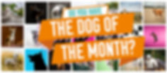 Dog of the Month Landing page 1.jpg