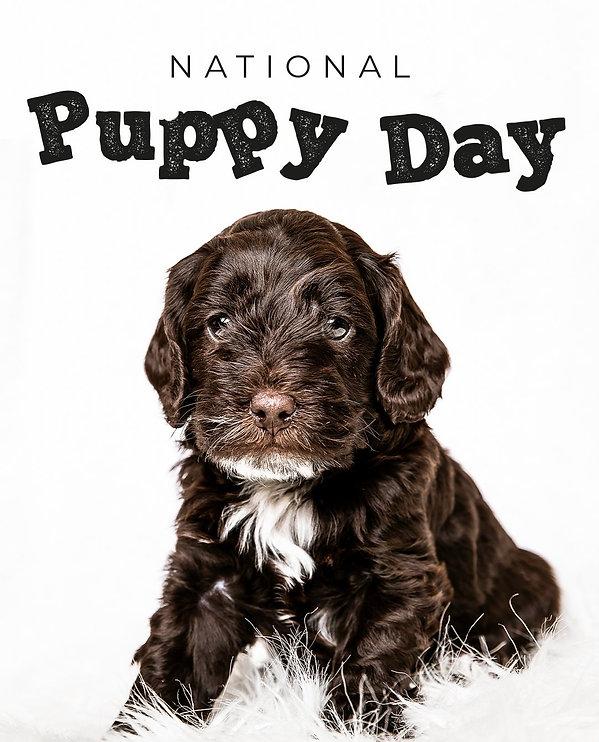 Puppy 3.jpg