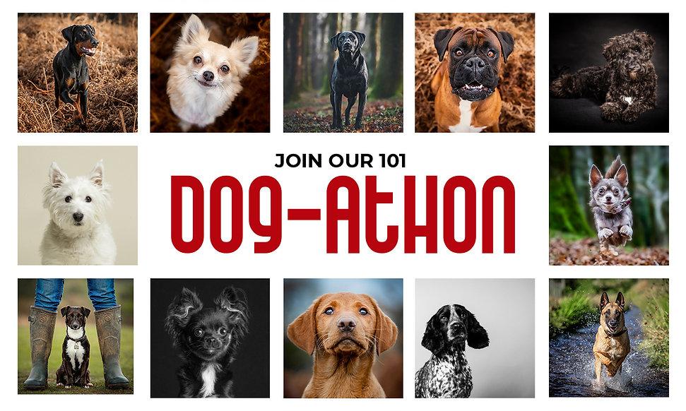 Hound Dog Images Dogathon Location Dog Photography