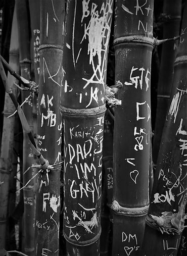 Bamboo Australiab_w.jpg