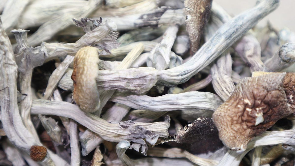 psychedelic mushrooms (shrooms)
