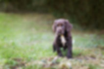 puppyfinal.jpg
