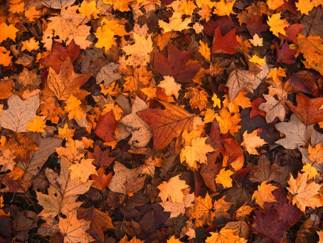 Fall leaf clean up improves the health of your lawn