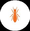 termite circle 1.png