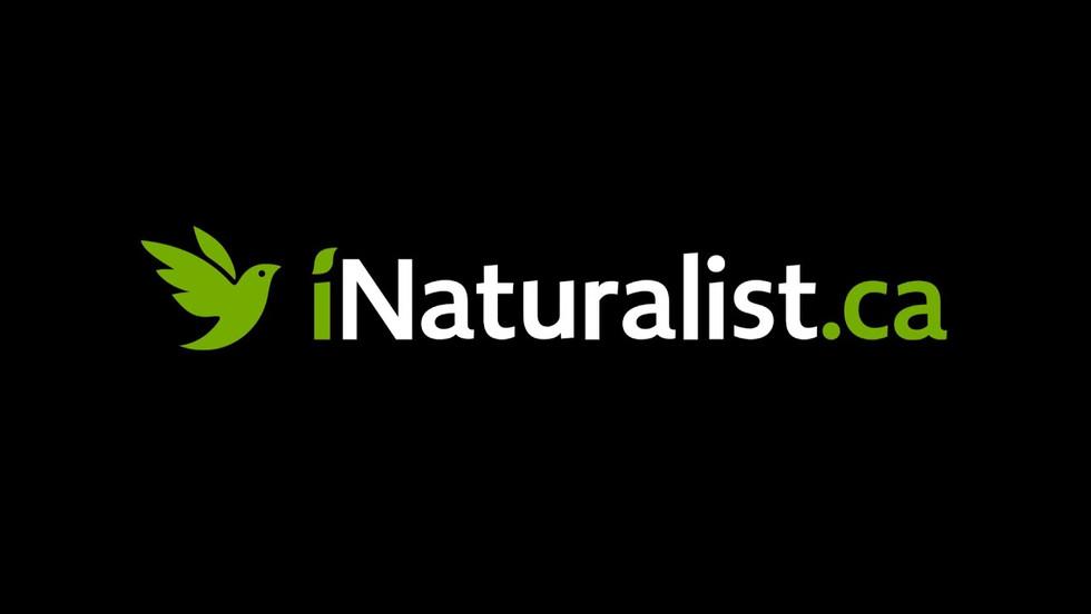 Les Natur'elles: Comment utiliser iNaturalist