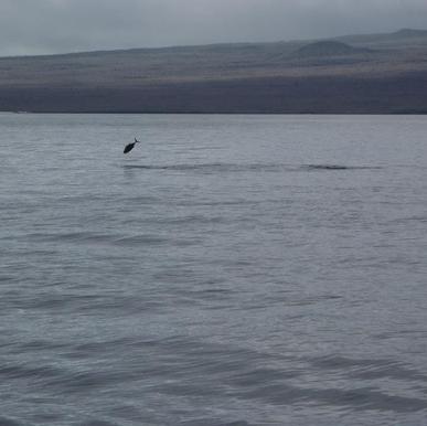 Galapagos_Fish_Jump.png
