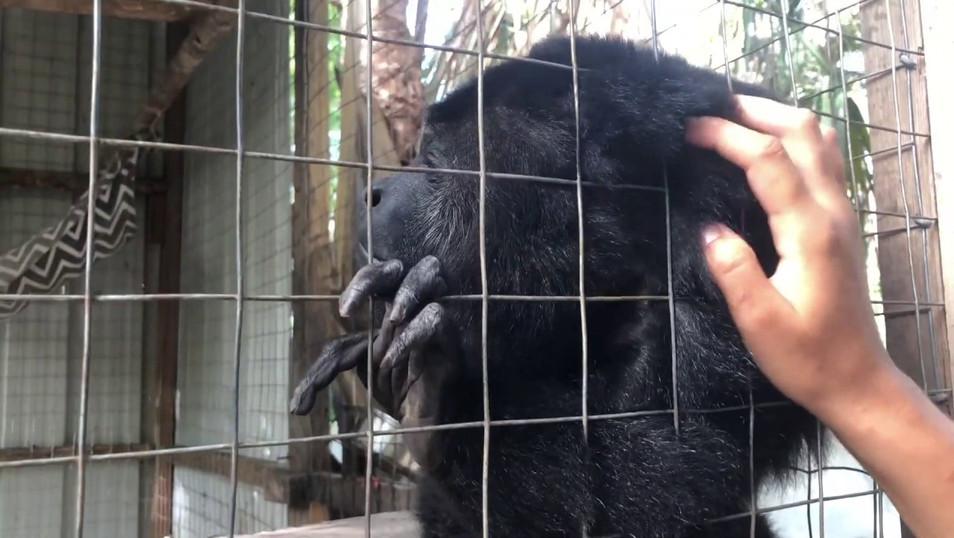 Wildtracks: A Belize Wildlife Rehabilitation Center