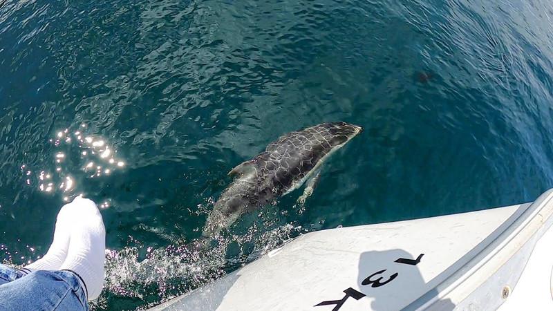 Sailing the British Columbia Coast: Broughton Archipelago