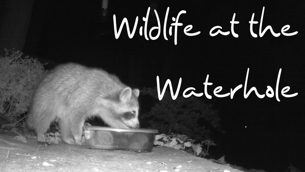 Wildlife at the Waterhole: A Symphony
