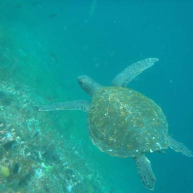 Galapagos_Turtle.png