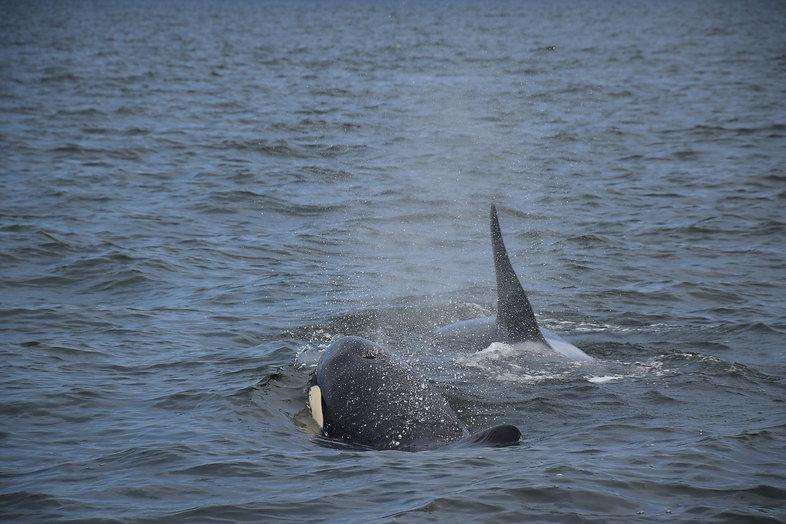 Whale_Blow.jpg