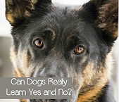 can-dogs-learn-yes-and-no-f.jpg