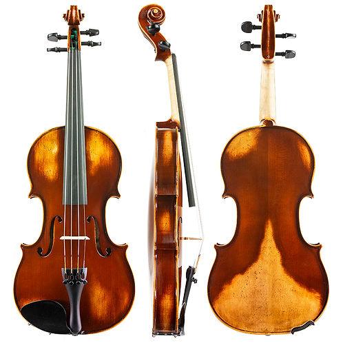 Daintree-Violin-D10_WEB800.jpg