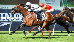 Fourth Stakes Win for Exceed And Excel's Signore Fox