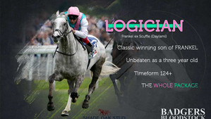 St Leger hero Logician to stand at Shade Oak Stud next year