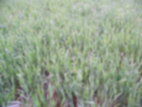 Harvest-Salad-6.jpg