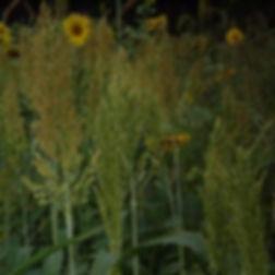 uplandplot-pic3-300x300.jpg