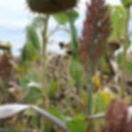 upland-bird-plot-seed-600x600.jpg