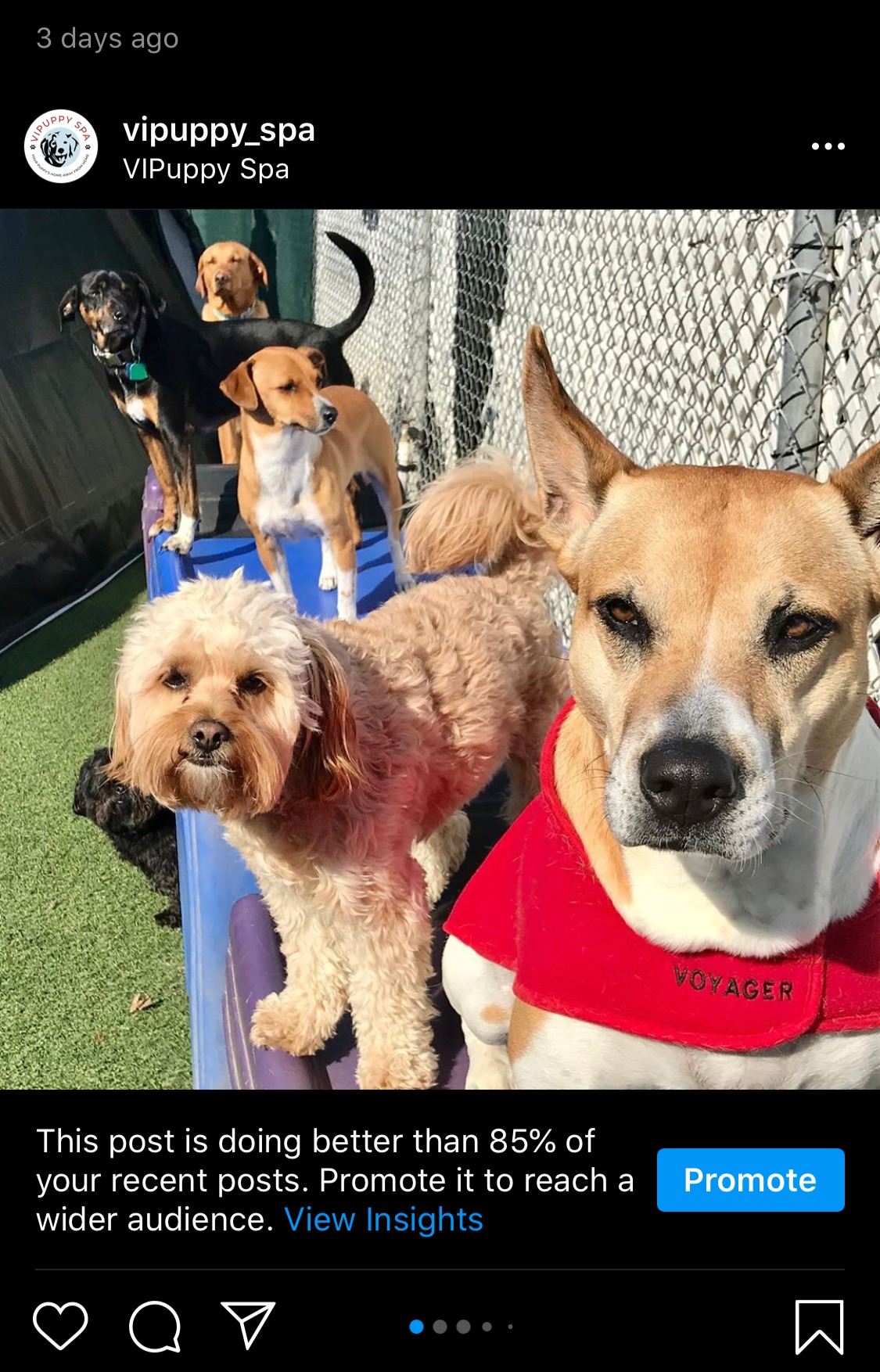Six dogs alongside fence outside at doggie daycare facility