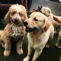 two happy dogs outside New Jersey doggie daycare facility