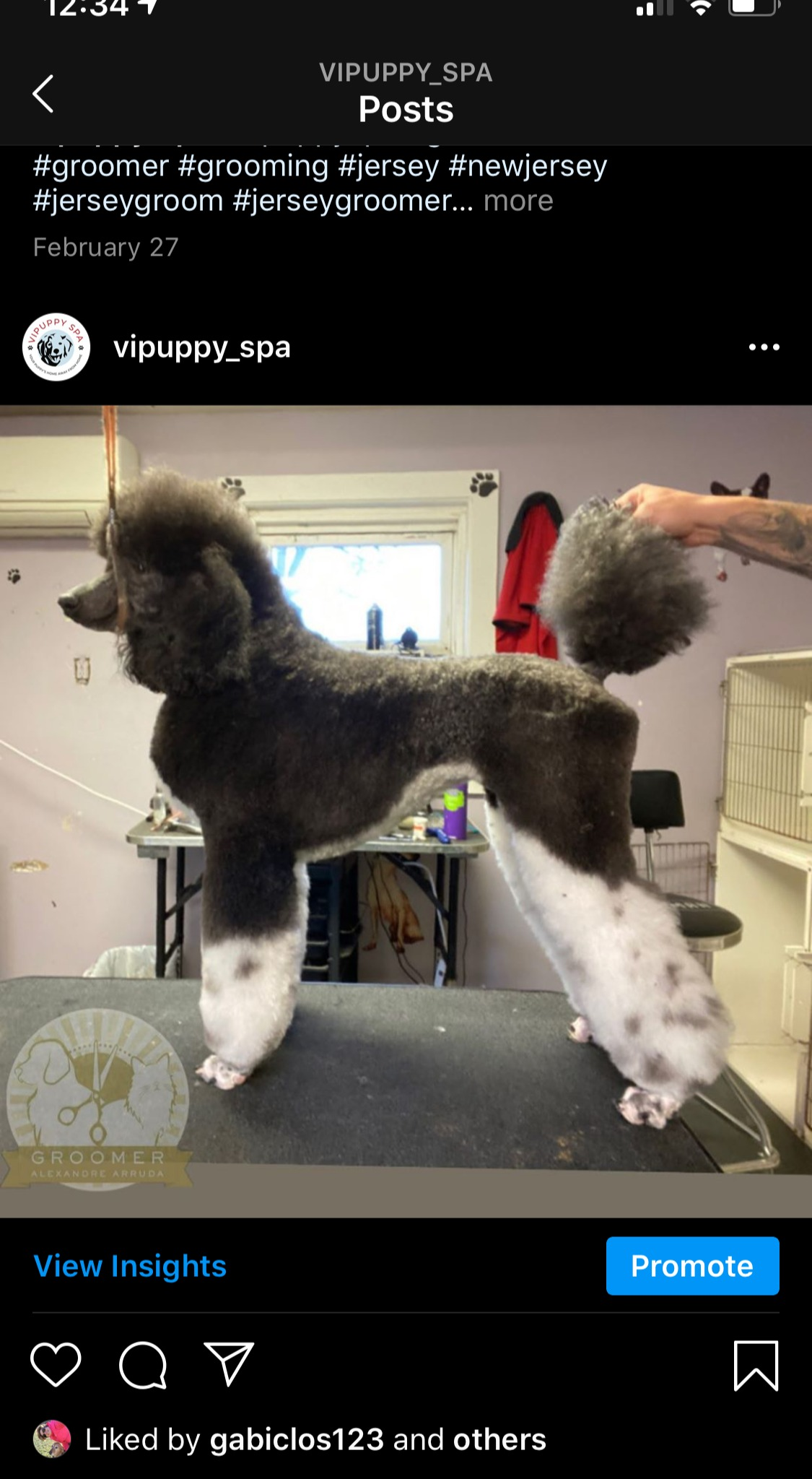 "Poodle ""after"" photo from day of grooming at VIPuppy Spa"