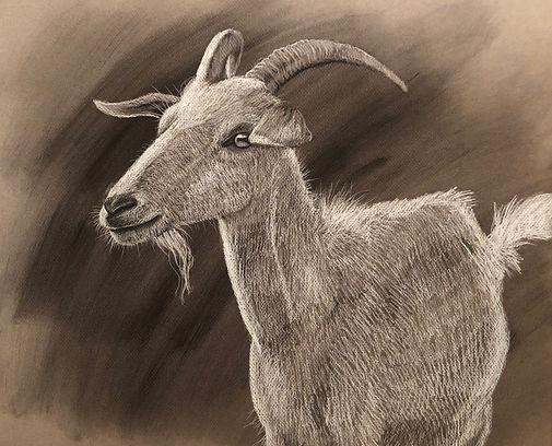 GoatDrawing.JPG