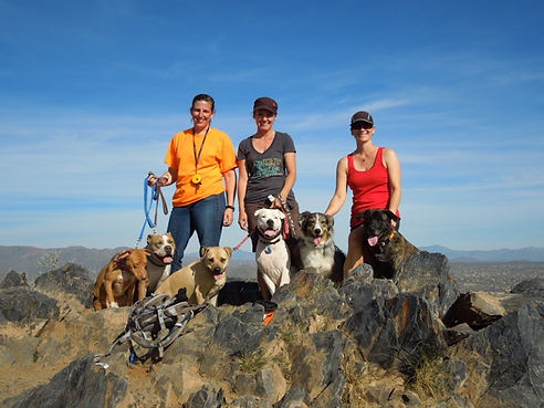 happy-dogs-black-mountain-az