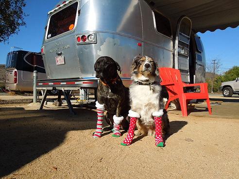 happy-dogs-holiday-san-diego-ca