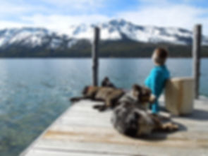 happy-dogs-lake-tahoe-ca