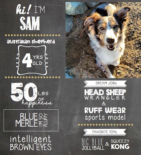 happy-dogs-sam