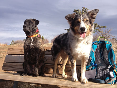 happy-dogs-mount-laguna-ca