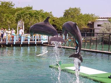 Show Delfines.jpg