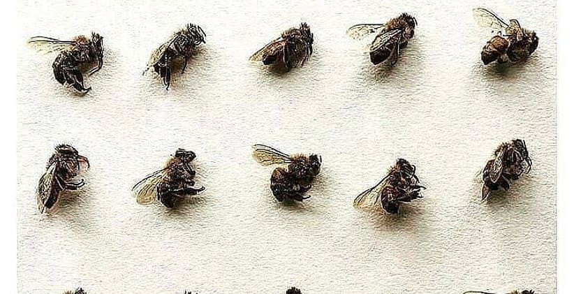 Its important to save our bees