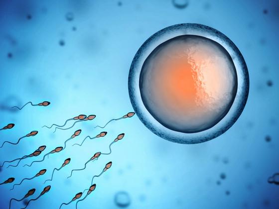 Making fertility-friendly lifestyle choices