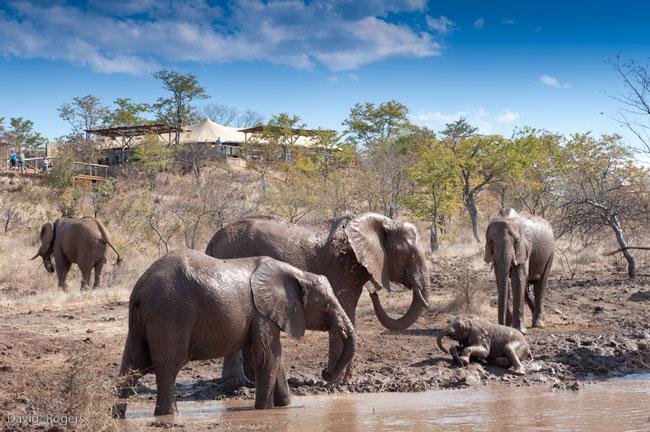 Elephant-Camp-4