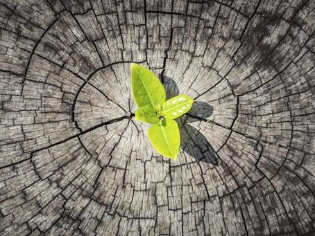 Resiliencia, ¿solamente es una palabra de moda?