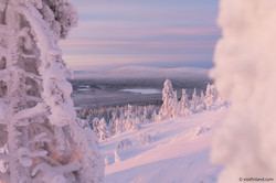 Finland_Lapland_winter_pink_Levi