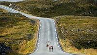 Northcape-road.jpg