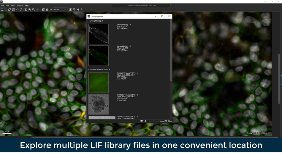 Multiple LIF library files v2.png