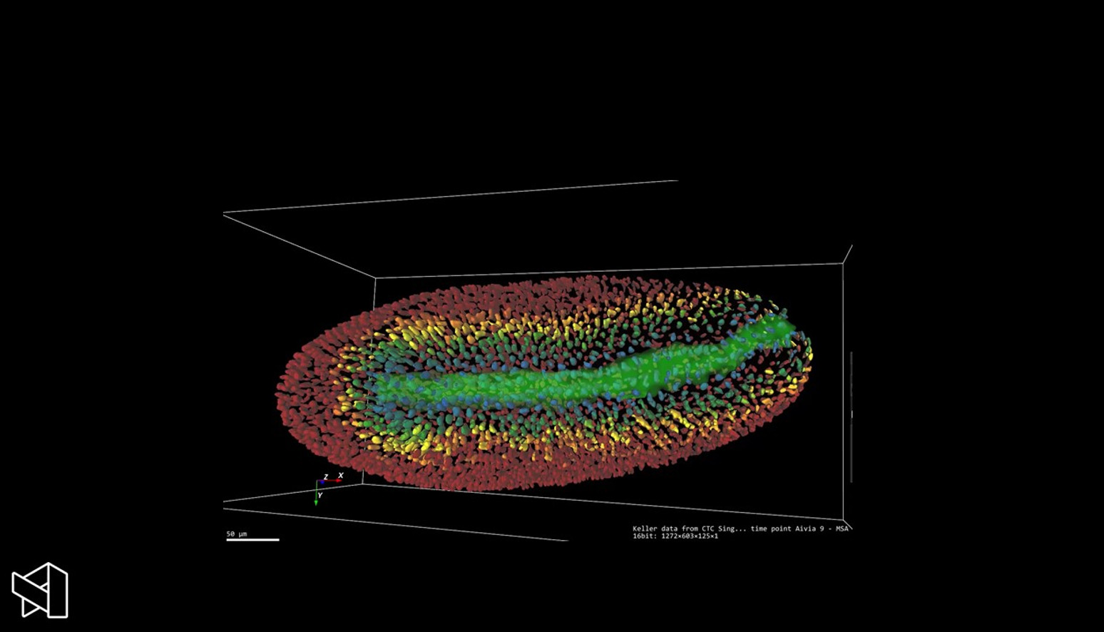 Visualize the distance of cells from the mid-region